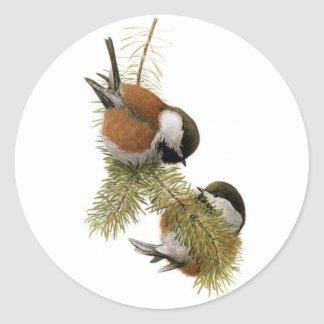 Fuertesのクリに支えられる《鳥》アメリカゴガラ ラウンドシール