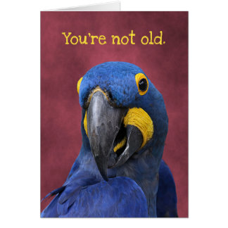 Funny Macaw Older Than 25 Birthday カード