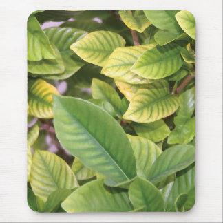 Gardeniaの緑の草木 マウスパッド