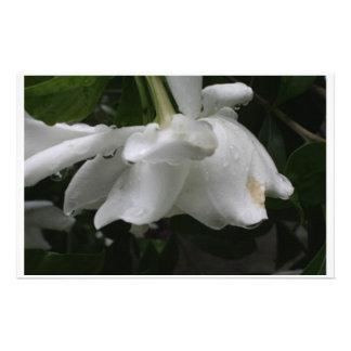 Gardeniaの静止した柔らかくエレガントな一見 便箋