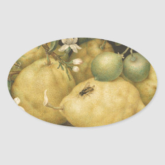 Garzoni -シトロン1640s.jpのボールが付いている静物画 楕円形シール
