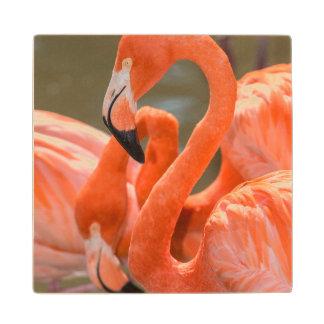Gatorlandのピンクのフラミンゴ ウッドコースター
