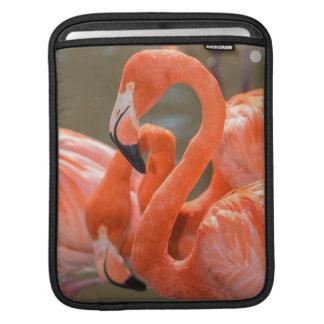 Gatorlandのピンクのフラミンゴ iPadスリーブ