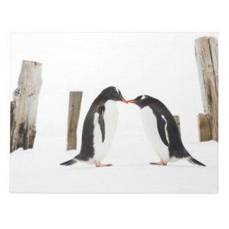 Gentooのペンギンの接吻 ノートパッド