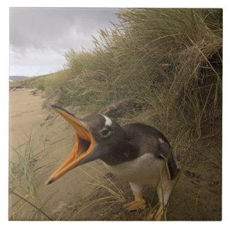gentooのペンギン、ビーバーのPygoscelisパプア、 タイル