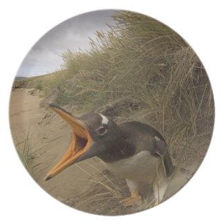 gentooのペンギン、ビーバーのPygoscelisパプア、 プレート