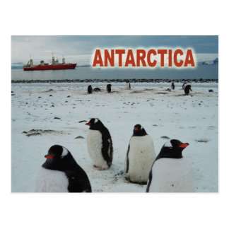Gentooのペンギン、南極半島 ポストカード