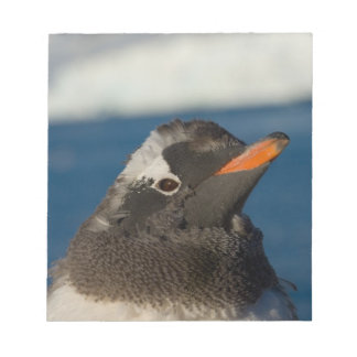 gentooのペンギン、Pygoscelisパプアのひよこ ノートパッド