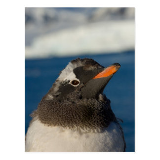 gentooのペンギン、Pygoscelisパプアのひよこ ポストカード