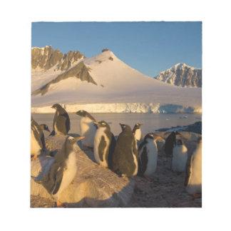 gentooのペンギン、Pygoscelisパプアのコロニー ノートパッド