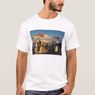gentooのペンギン、Pygoscelisパプアのコロニー Tシャツ