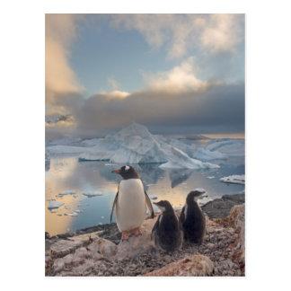 gentooのペンギン、Pygoscelisパプアの2の親 ポストカード