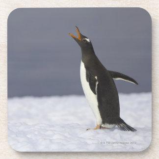 Gentooのペンギン(Pygoscelisパプア)の大人の鳥 コースター