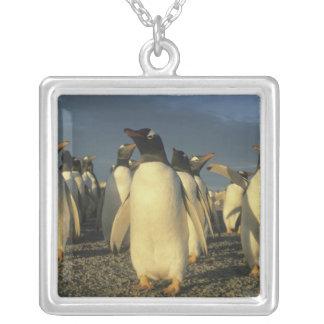 Gentooのペンギン、(Pygoscelisパプア)、フォークランド シルバープレートネックレス