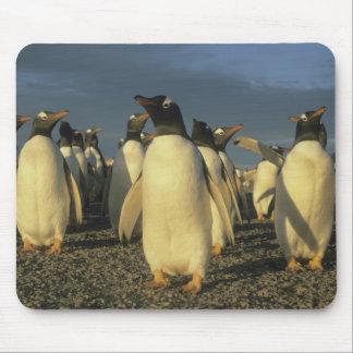 Gentooのペンギン、(Pygoscelisパプア)、フォークランド マウスパッド