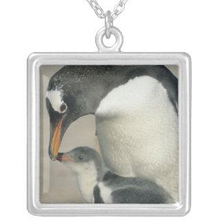 Gentooのペンギン、(Pygoscelisパプア)、大人 シルバープレートネックレス