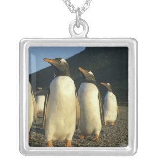 Gentooのペンギン、Pygoscelisパプア)、日没、 シルバープレートネックレス