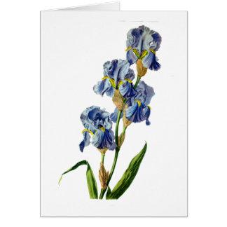 Gerard van Spaendonが自然から描く青いアイリス カード