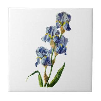 Gerard van Spaendonが自然から描く青いアイリス タイル