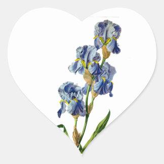 Gerard van Spaendonが自然から描く青いアイリス ハートシール