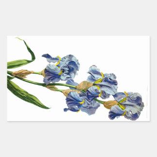 Gerard van Spaendonが自然から描く青いアイリス 長方形シール