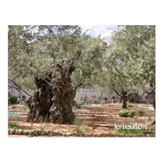 Gethsemane、エルサレム、イスラエル共和国のオリーブ ポストカード