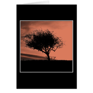 Glastonburyのホーソーン。 丘の木。 オレンジ黒 カード