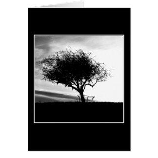 Glastonburyのホーソーン。 木。 白黒。 カード