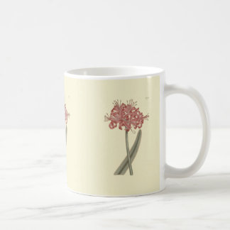 Glaucous Leavedアマリリスの植物の絵 コーヒーマグカップ
