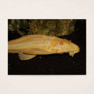 Glyptoperichthysのgibbiceps 名刺