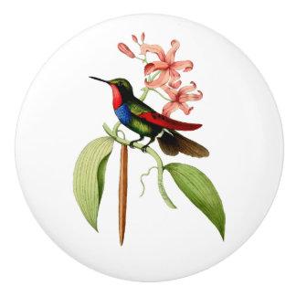 Golden Tailed Sapphire Hummingbird セラミックノブ