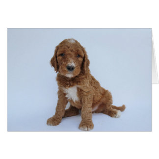 Goldendoodleの子犬の挨拶状 カード