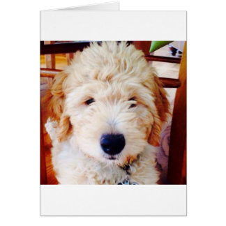 Goldendoodleの子犬 カード