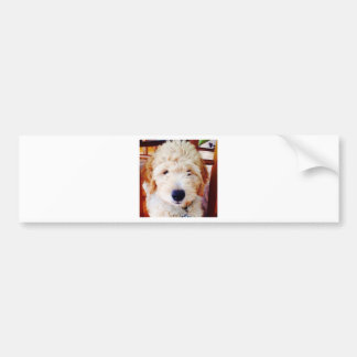 Goldendoodleの子犬 バンパーステッカー