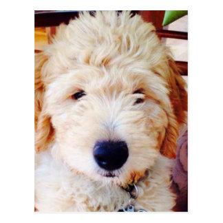 Goldendoodleの子犬 ポストカード