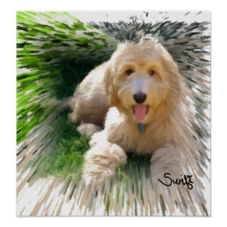 Goldendoodle Labradoodle ポスター