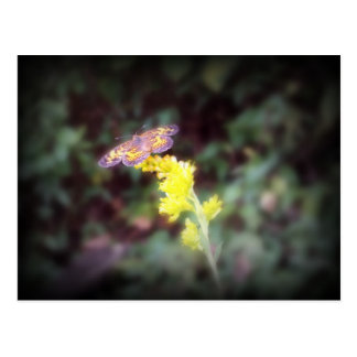 Goldenrod花の蝶 ポストカード