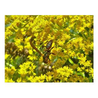 Goldenrod項目のアシナガバチ ポストカード