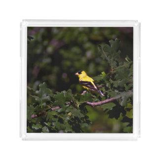 Goldfinchのサービングの皿 アクリルトレー