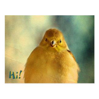 Goldfinchの写真 ポストカード