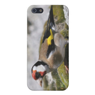 Goldfinchの写真 iPhone SE/5/5sケース