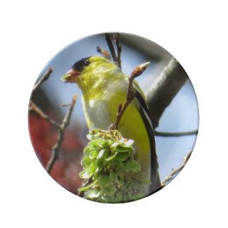Goldfinchの磁器皿 磁器プレート