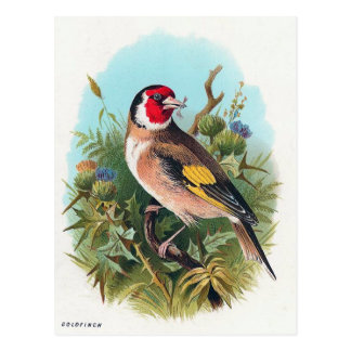 Goldfinch ポストカード