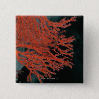Gorgonianの海ファンのクローズアップ 5.1cm 正方形バッジ