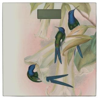 Gouldのハチドリの鳥の野性生物動物の花 体重計
