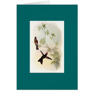 Gould -とげビルの赤おおわれたハチドリ カード