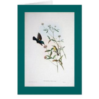 Gould -エリコSunbird カード
