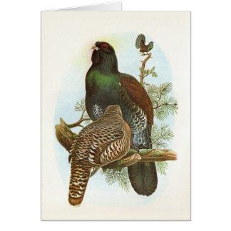 Gould -ヨーロッパオオライチョウ- Tetraoのurogallus カード