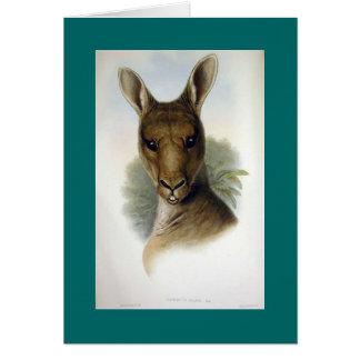 Gould -東の灰色のカンガルーの頭部 カード