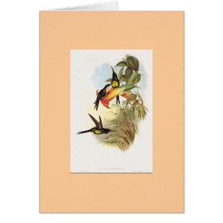 Gould -皇后のハチドリ カード